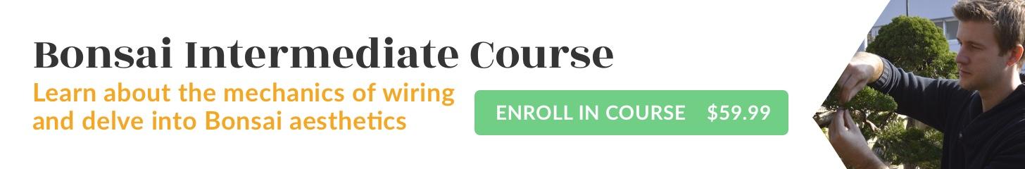 Bonsai Intermediate Course