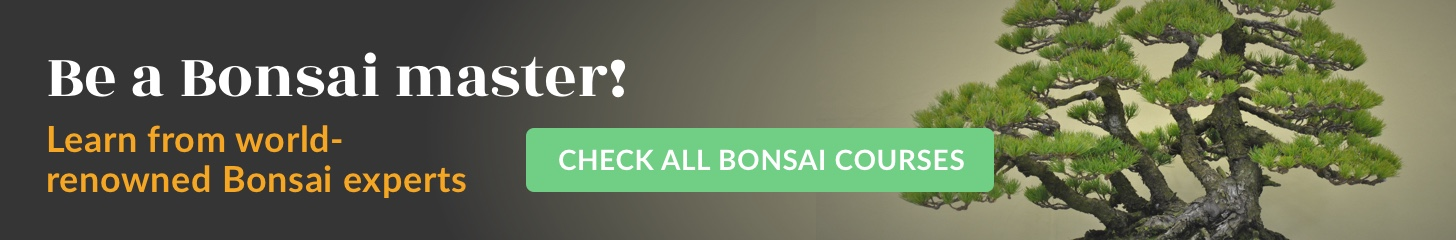 Online Bonsai courses