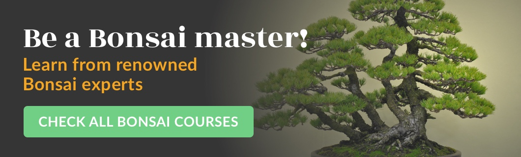 Online Bonsai courses