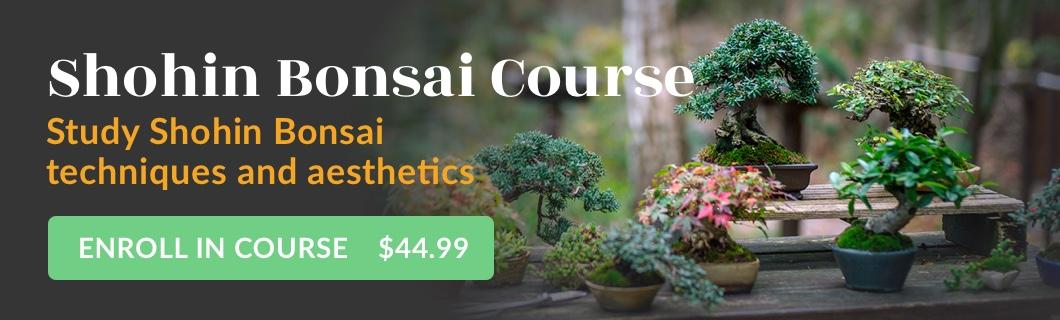 Shohin Bonsai Course