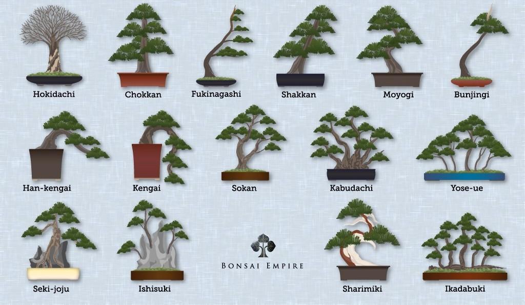 Bonsai Styles Shapes And Forms Bonsai Empire