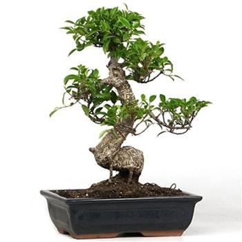 Help My Bonsai Is Losing Leaves Bonsai Empire