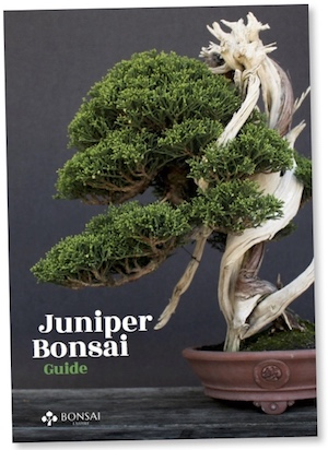 Juniper Guide, eBook
