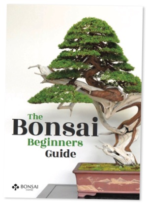 The Bonsai beginners guide