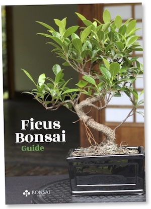 Ficus guide, eBook