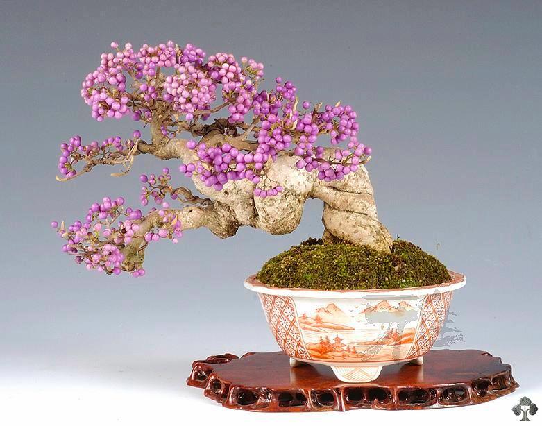 Flowering bonsai bonsai empire for Unusual bonsai creations