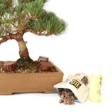 Different kinds of Bonsai fertilizer