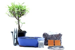 The Ficus kit