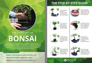 Step-by-step guide for Ficus