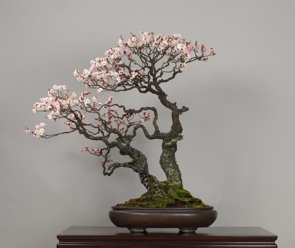 Bonsai Tree Gallery Bonsai Empire