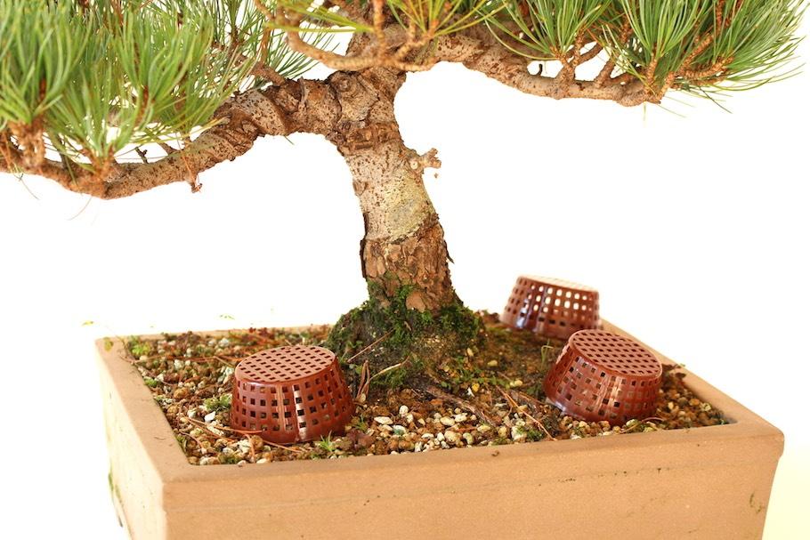 Fertilizing Bonsai Feeding Is Crucial For Trees Bonsai Empire