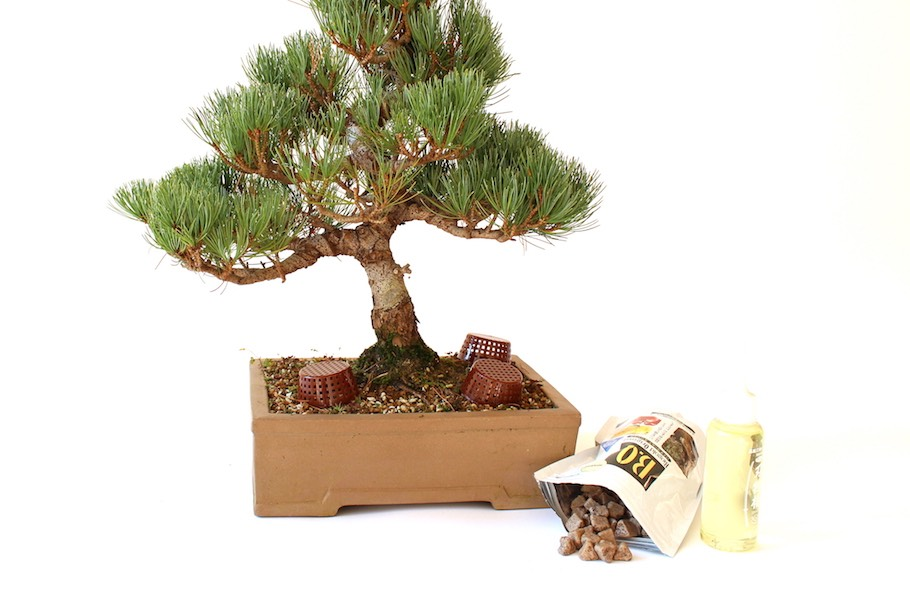 Tree fertilizer tree u0026 shrub davey arbor green pro for Different kinds of bonsai trees