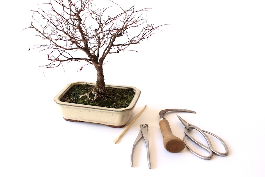 Repotting Bonsai How To Repot Your Tree Bonsai Empire