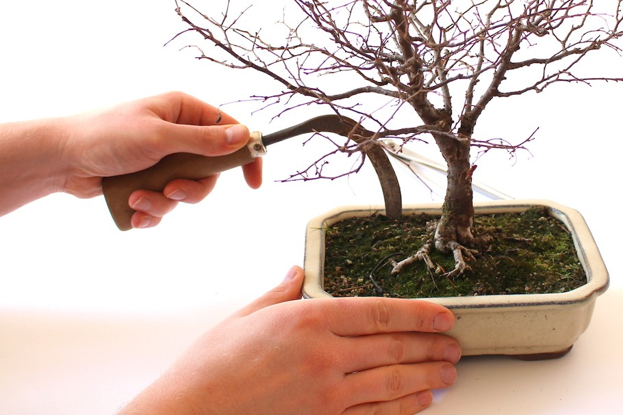 Repotting Bonsai, how to repot your tree - Bonsai Empire