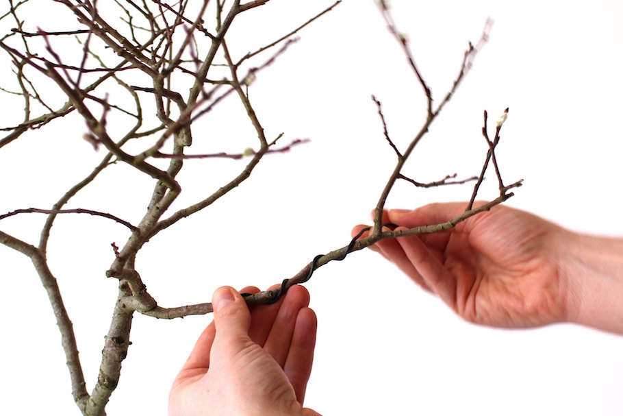 Wiring Bonsai trees to shape and bend the nches - Bonsai ... on