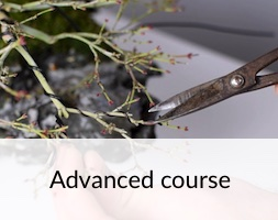 Bonsai Advanced Course