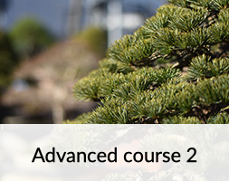 Bonsai Advanced Course 2