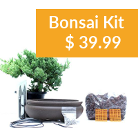Bonsai DIY Kit