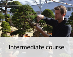 Bonsai Intermediate Course