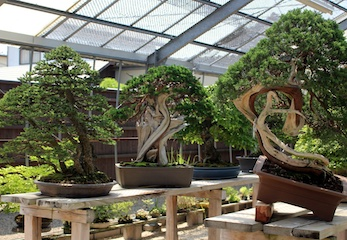 Fundamentals Bonsai course