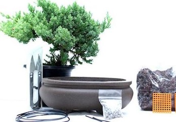 Bonsai Starter Kits