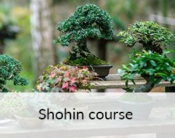 Shohin Bonsai Course