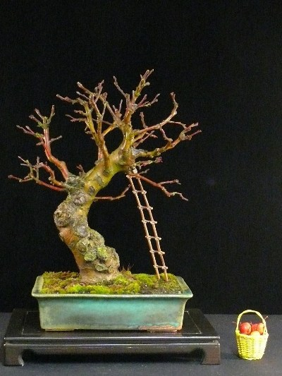 Bonsai apple