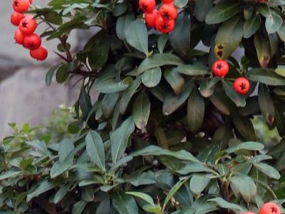 Id My Bonsai Tree Identification Guide Bonsai Empire