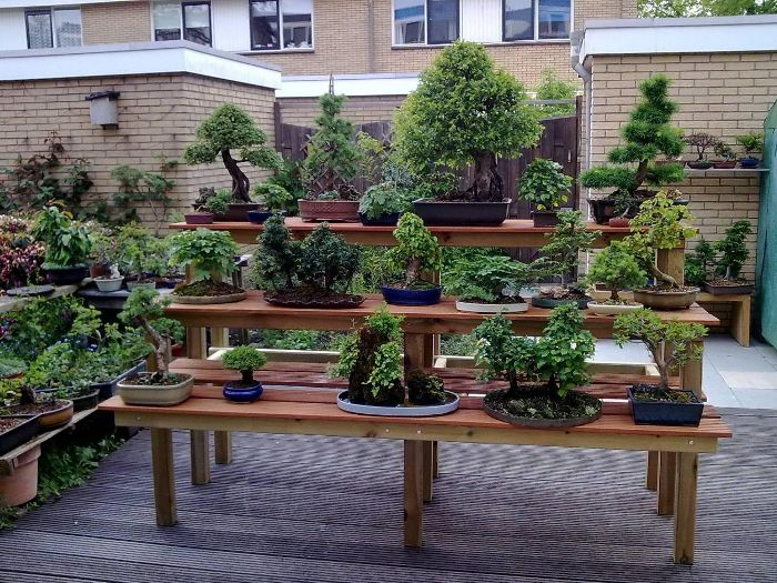 The result, the bench in my Bonsai garden .