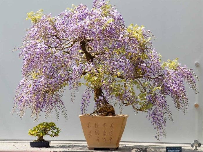 Wisteria Bonsai Empire