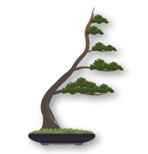 Bonsai Styles Shapes And Forms Bonsai Empire