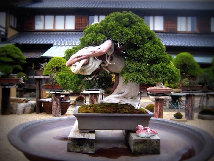 Bonsai in Shunkaen