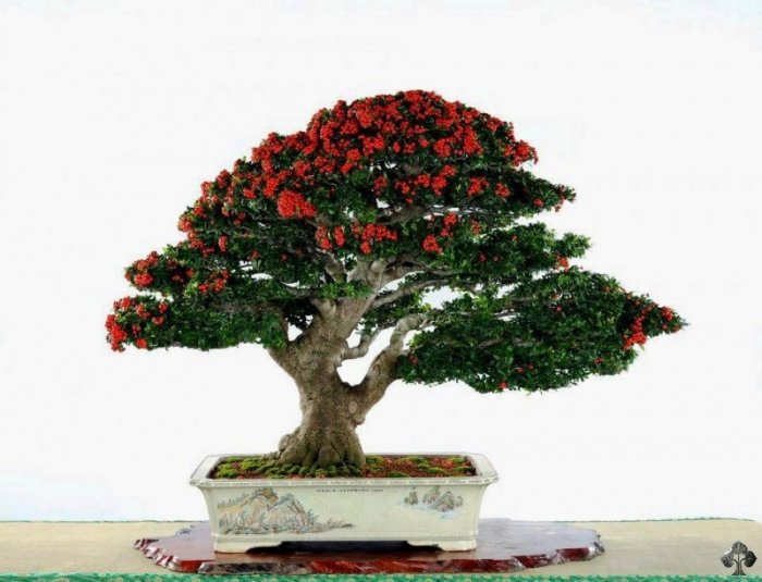 Top 10 Chinese Penjing Trees Bonsai Empire