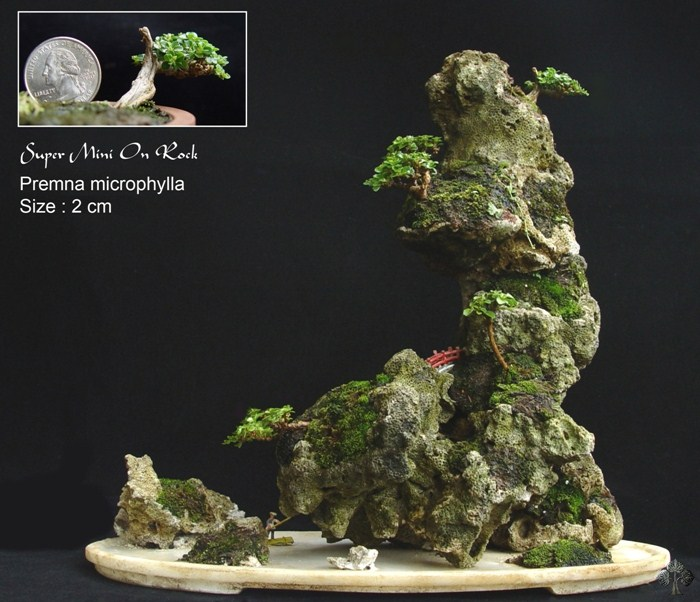 top 10 chinese penjing trees bonsai empire. Black Bedroom Furniture Sets. Home Design Ideas