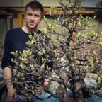 bonsai.niwaki's Avatar