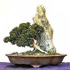 damo1884's Avatar