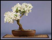 Mixing soil - Bonsai forum - Bonsai Empire